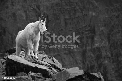 Mountain goat against a dramatic rocky landscape - Glacier national park, Montana