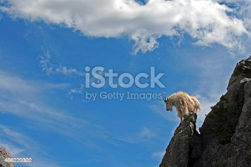 Mountain Goat on Harney Peak pinnacle spire in Black Hills South Dakota USA with cloudscape background