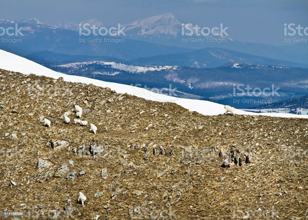 Mountain goats from the air stock photo