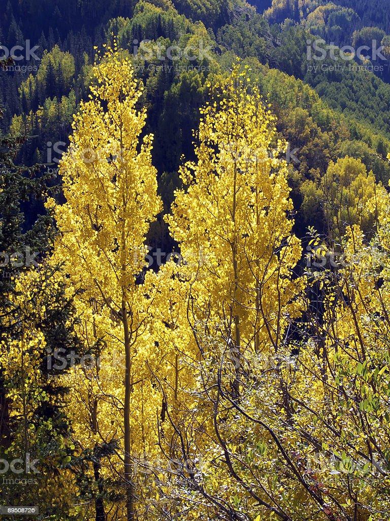 Montagne Gold photo libre de droits