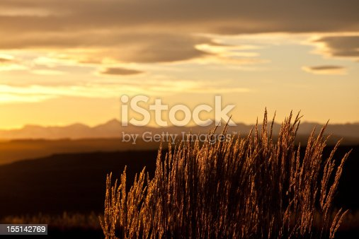 A scenic of mountain grass against rocky mountain sunset. Dramatic sky with copyspace. Calgary, Alberta, Canada. Nature or landscape image depicting the stunning foothills of Alberta and a montane environment or habitat with scenic chinook country sky and beautiful soft backlighting. Image taken in fall with Canon 5D Mark II camera body. Nobody is in the image.