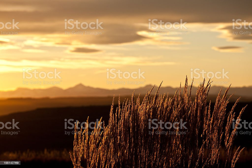 Mountain Grass Backlit in the Rockies stock photo
