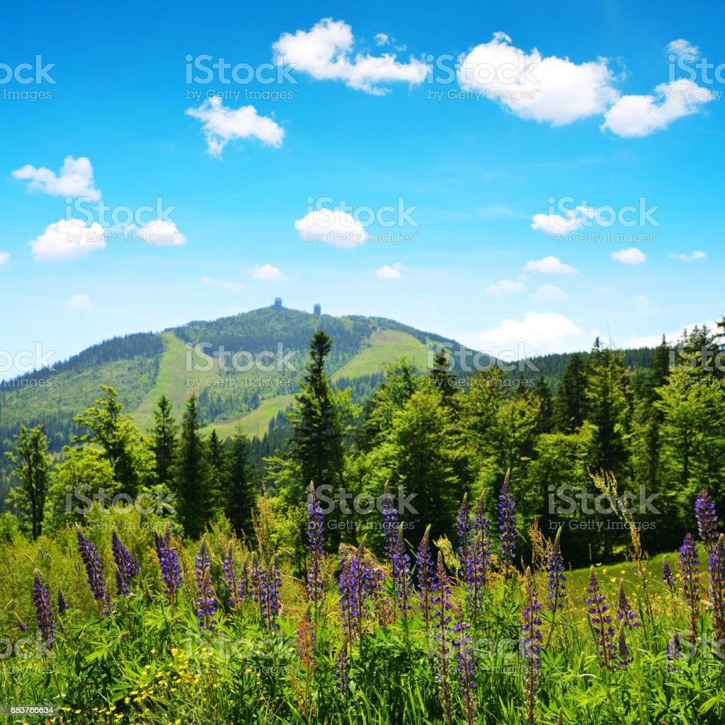 Mountain Grosser Arber in National park Bavarian forest, Germany. stock photo