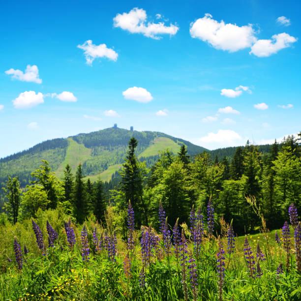 mountain grosser arber i nationalparken bayersk skog, tyskland. - bayerischer wald bildbanksfoton och bilder