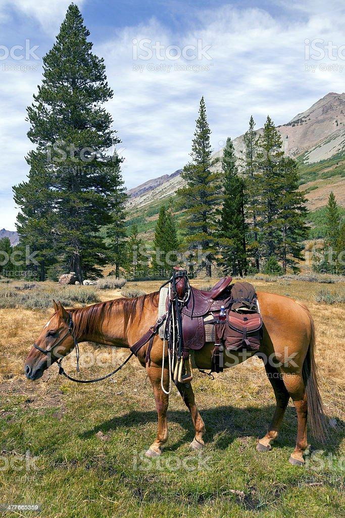 Mountain Horse under Saddle royalty-free stock photo