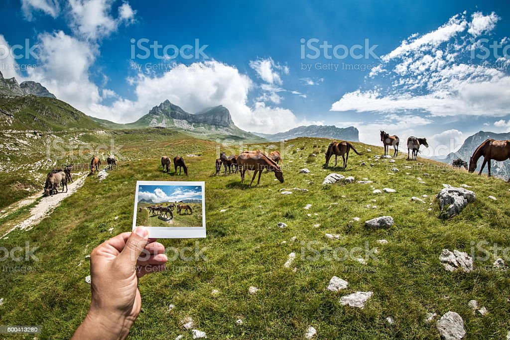 Mountain horses stock photo