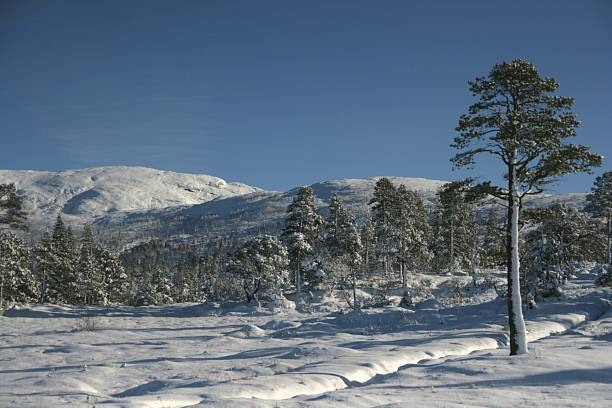 Mountain in winter stock photo