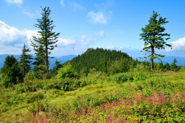 mountain klein osser i nationalparken bayersk skog, tyskland. - bayerischer wald bildbanksfoton och bilder