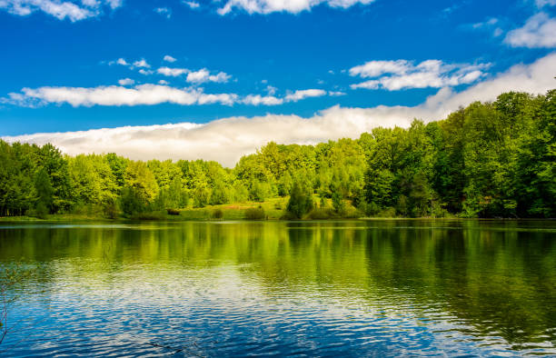 mountain lake among the forest - lakeshore stock photos and pictures