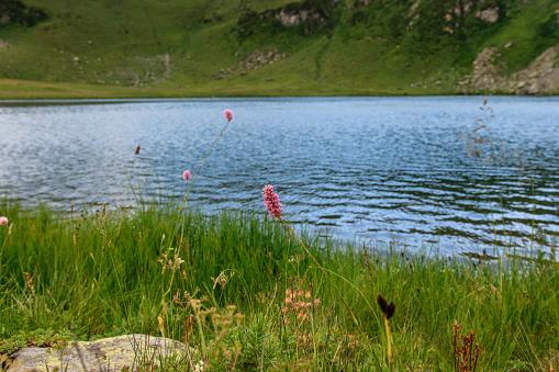 istock Mountain lake in Abkhazia 911355846