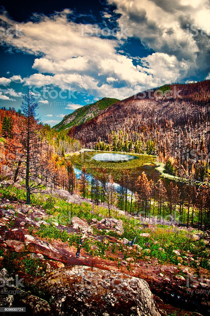 Mountain Lake Lillypads After Fire stock photo