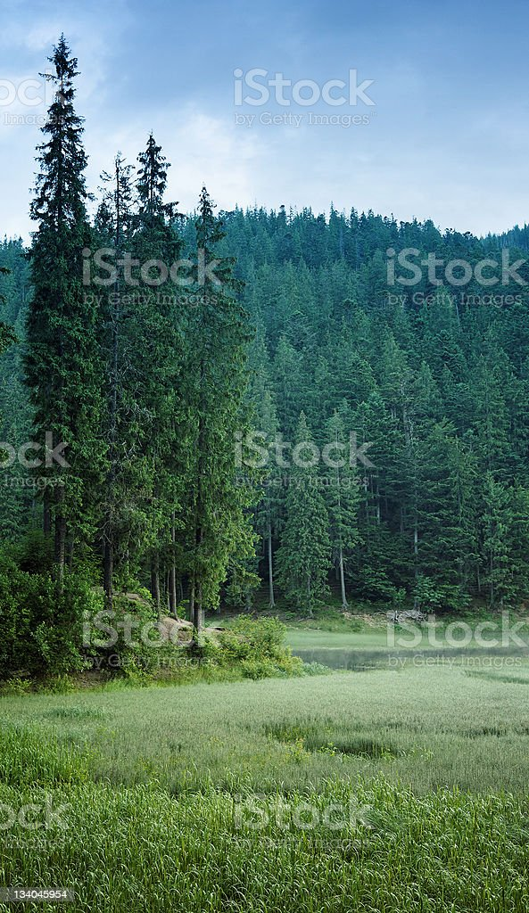 Mountain lake surrounded by green pine forest. royalty-free stock photo