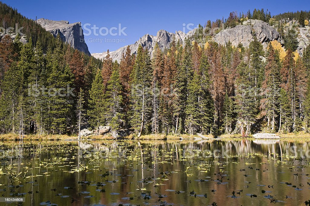 Mountain Lake With Pine Beetle Damaged Forest royalty-free stock photo