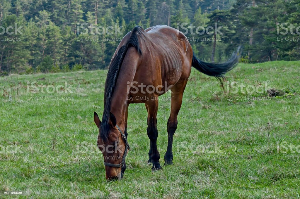 Mountain landscape and  sporting horses in springtime meadow, Plana mountain stock photo