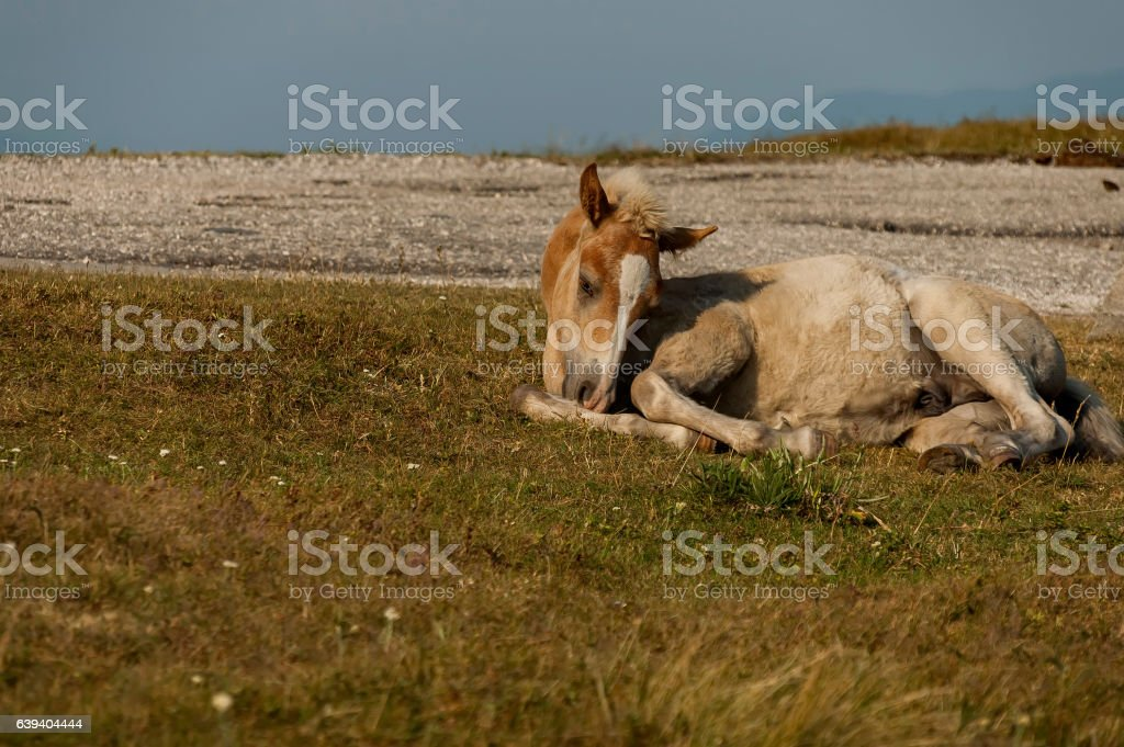 Mountain landscape and wild colt horse rest in Central Balkan stock photo