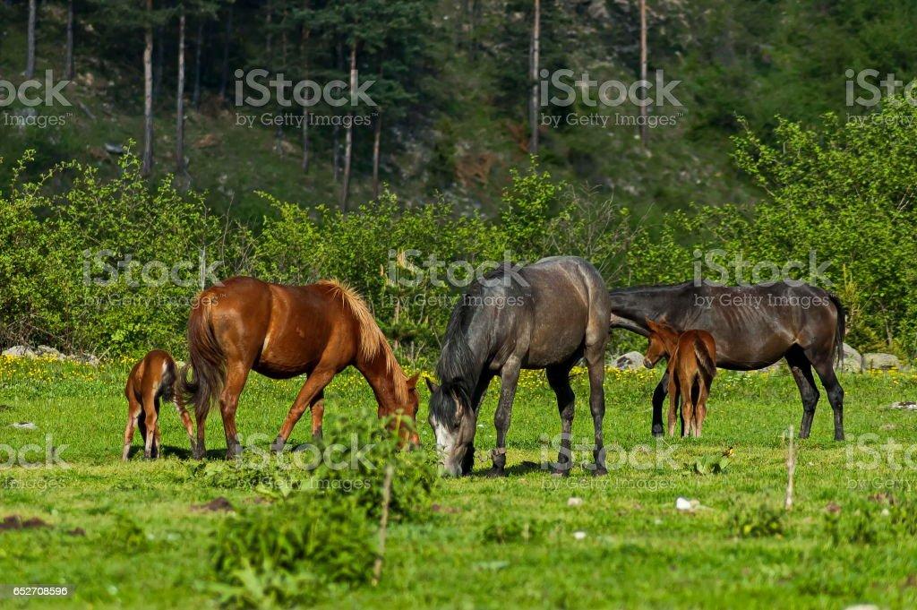 Mountain landscape and wild horses in Rila mountain stock photo