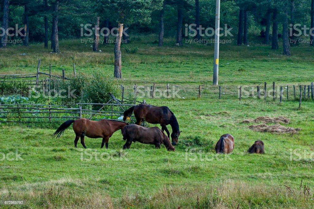 Mountain landscape and wild horses stock photo