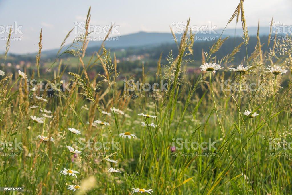 Mountain landscape. Carpathians. stock photo