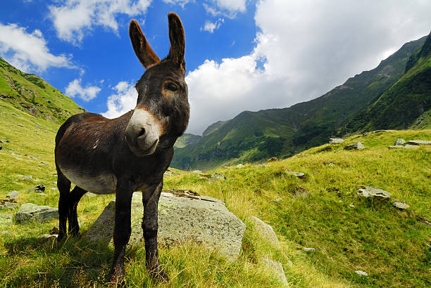 Mountain landscape featuring a lovely donkey stock photo