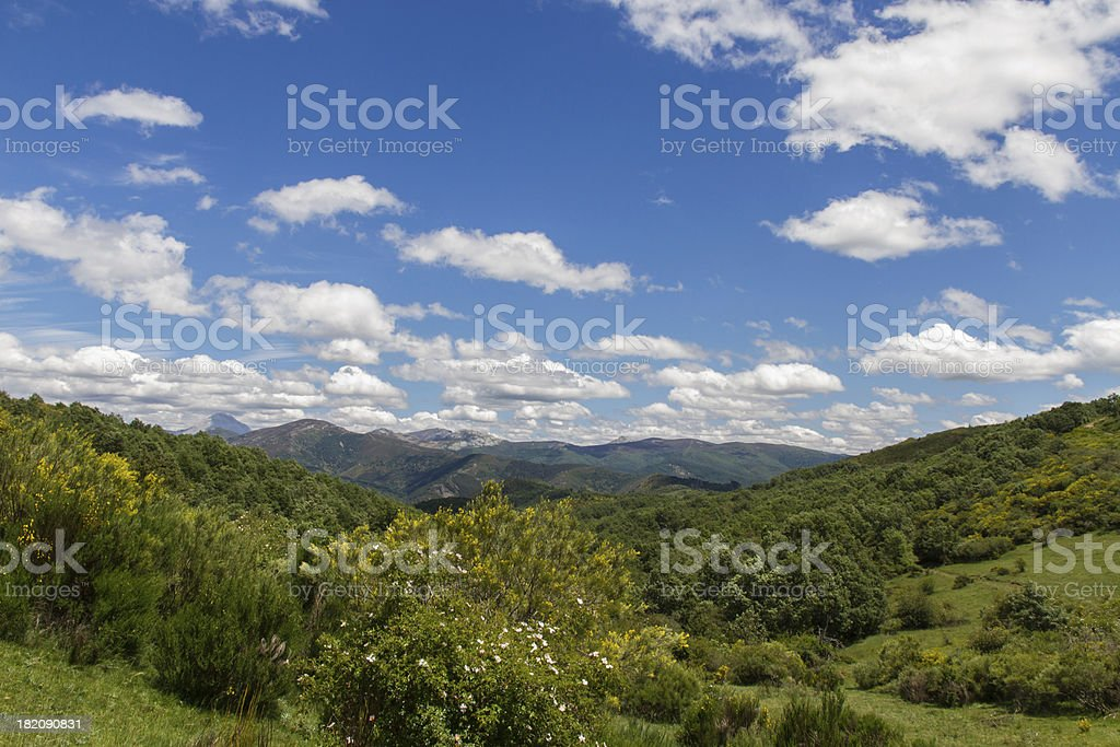 Mountain landscape forest vegetation and clear blue sky - Paisaje royalty-free stock photo
