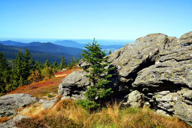 berg landskap i nationalparkbayerischer wald, tyskland. - bayerischer wald bildbanksfoton och bilder