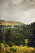 Mountain landscape with conifer trees