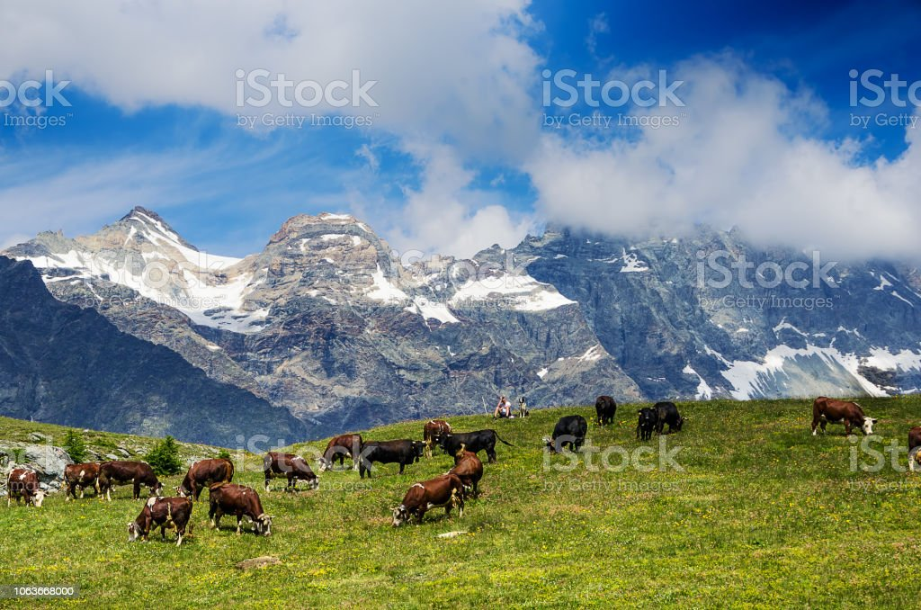 Mountain landscape, some cows grazing in a cloudy day - foto stock