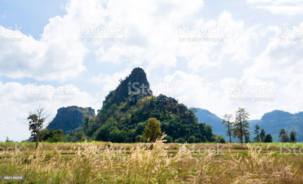 背景が森の山風景を見る ロイヤリティフリーストックフォト