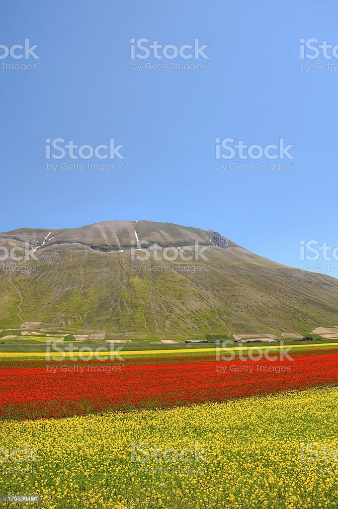 Mountain landscape with a flowery valley stock photo