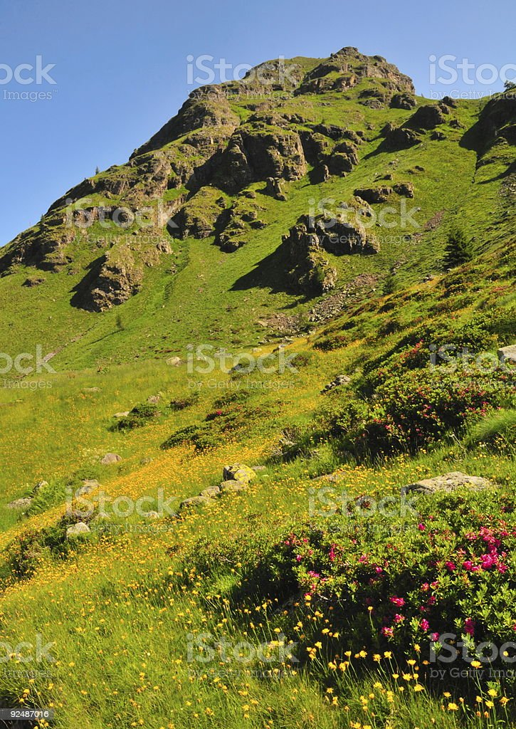 mountain landscape with flowers royalty-free stock photo
