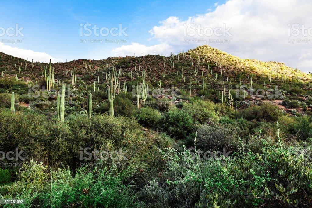 Mountain landscape with Saguaro cactus in Arizona, USA stock photo