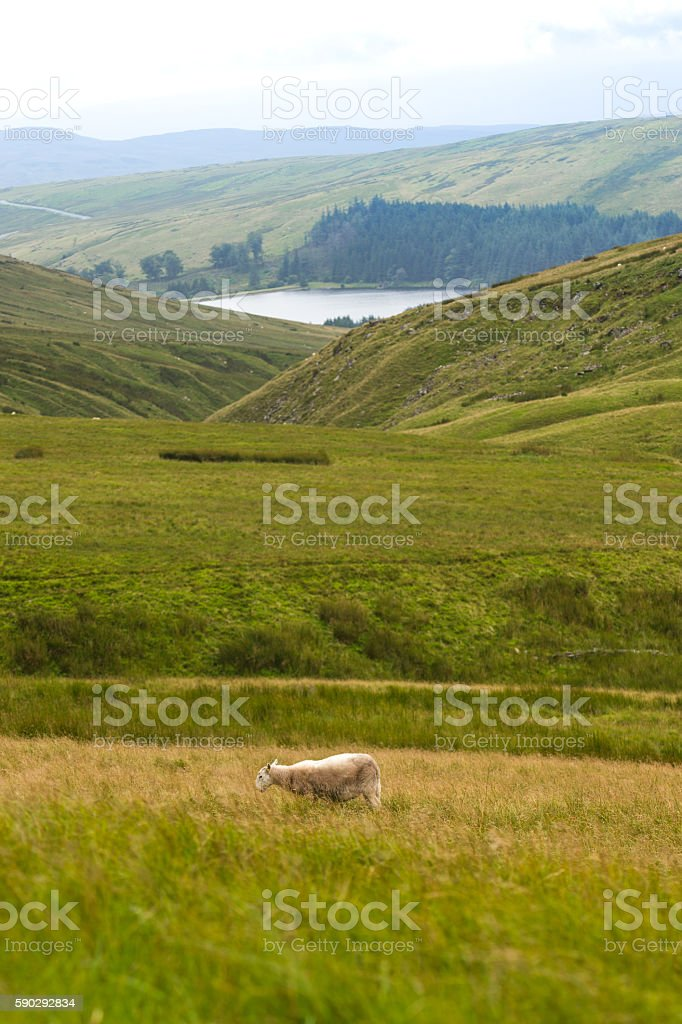 Mountain Landscape with Sheeps, Brecon Beacons, South Wales, UK Стоковые фото Стоковая фотография