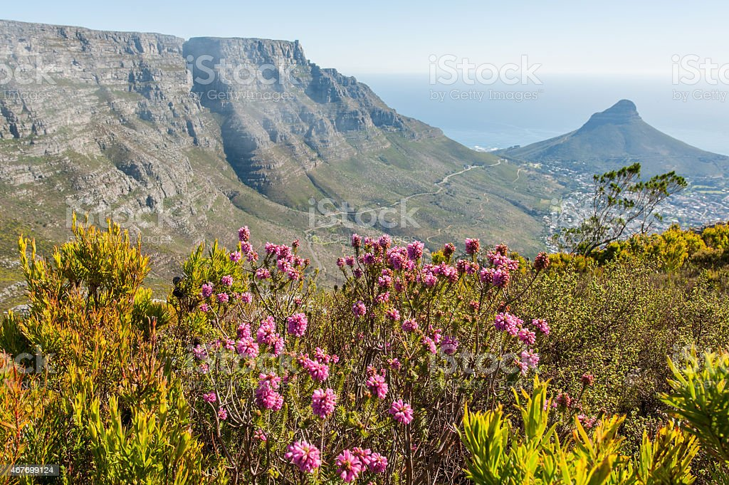 mountain landscape with summer flowers in cape town, south africa stock photo