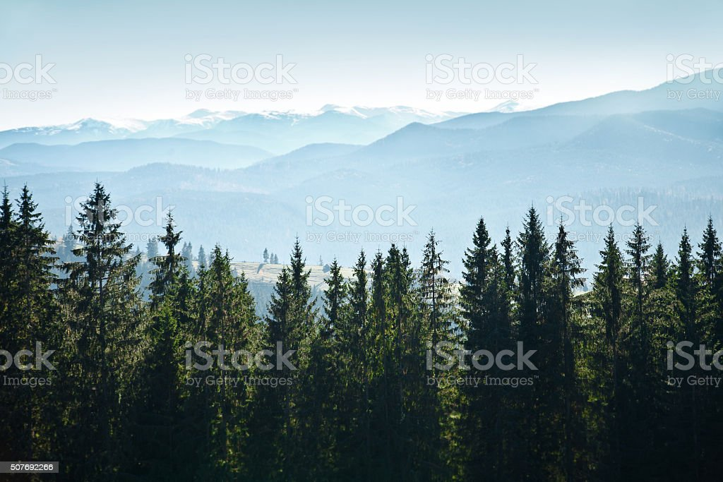 Mountain landscape with trees stock photo