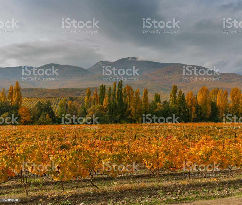Mountain landscape with vineyards and rainy skies at fall season on Crimean peninsula stock photo