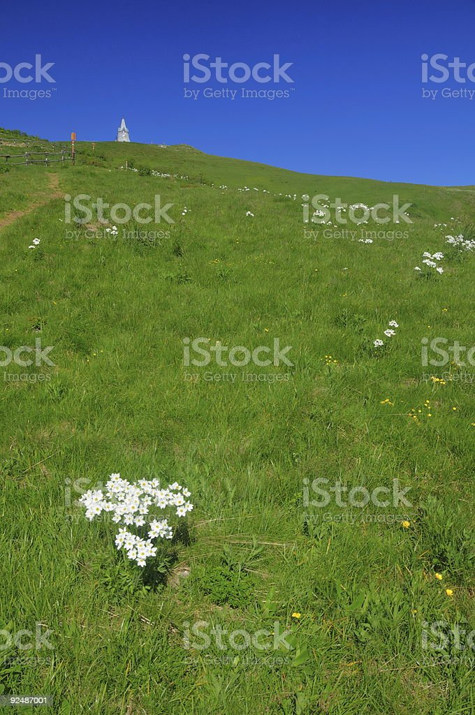 mountain landscape with white flowers royalty-free stock photo