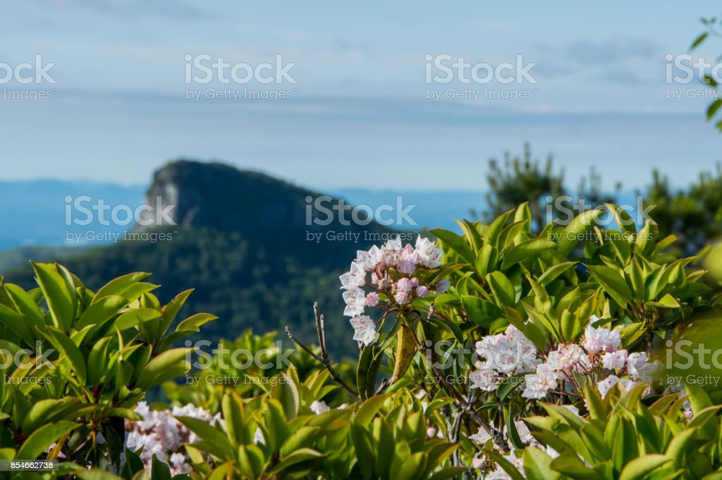 Mountain Laurel Bloom with Table Rock Mountain in Background stock photo