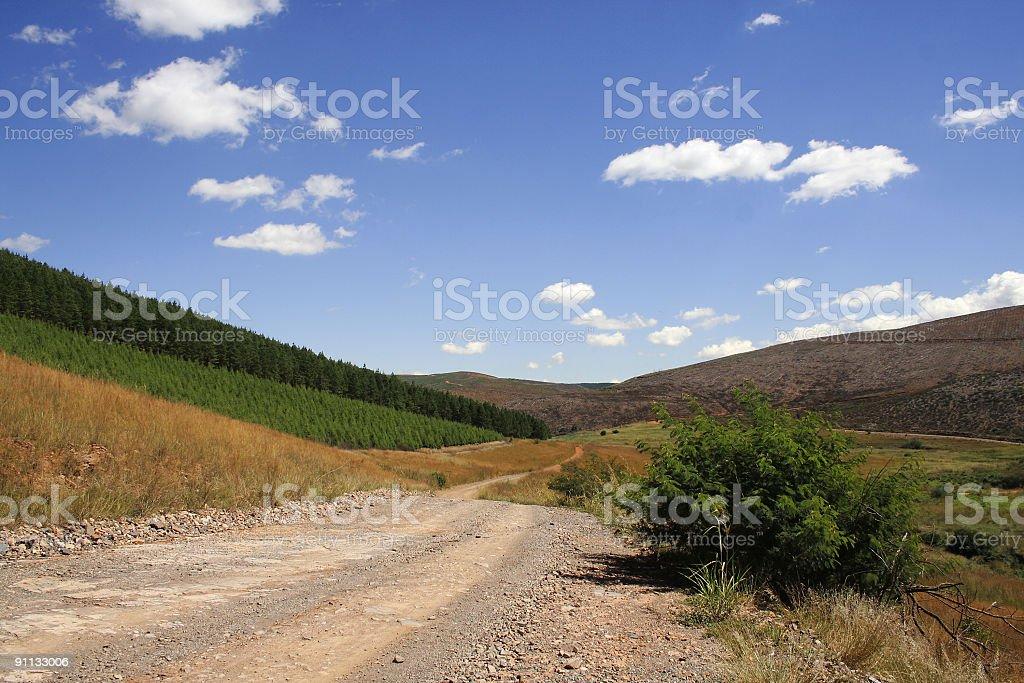 Mountain logging road royalty-free stock photo