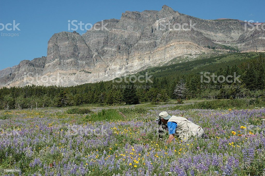 Mountain Meadow 1 stock photo