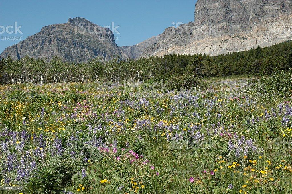 Mountain Meadow 3 stock photo