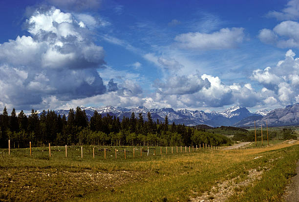 Mountain meadow in Alaska Meadow flanked by majestic mountains and billowing clouds in Alaska hearkencreative stock pictures, royalty-free photos & images