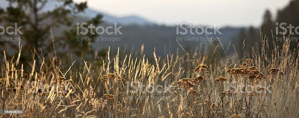Mountain Meadow in Fall royalty-free stock photo