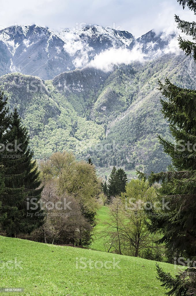 Mountain meadow in spring time royalty-free stock photo