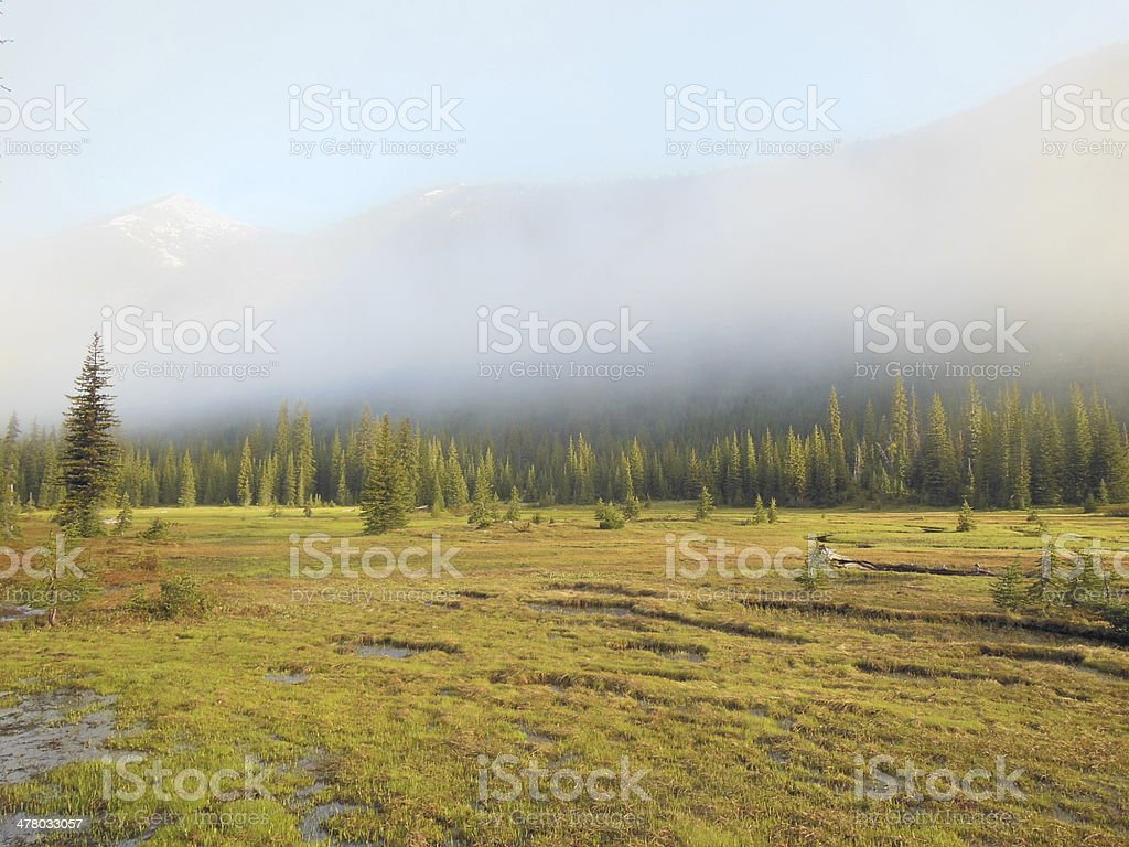 Mountain Meadow in the Morning royalty-free stock photo