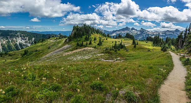 berg wiese weg - pacific crest trail stock-fotos und bilder