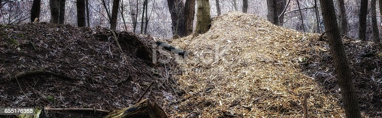Mountain of sawdust in the forest, wildlife and deforestation