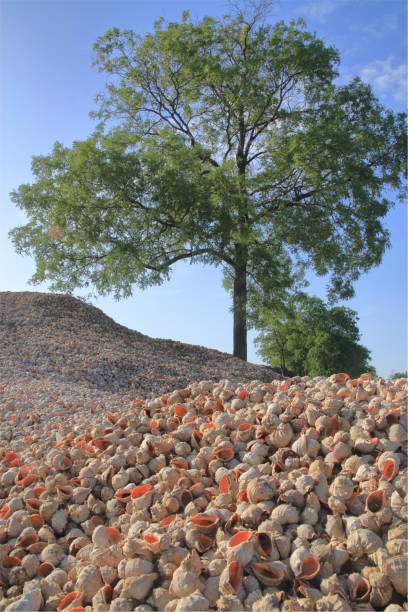 Mountain of shells of marine mollusks.