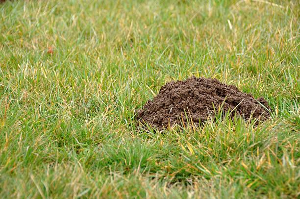 Mountain or Molehill stock photo