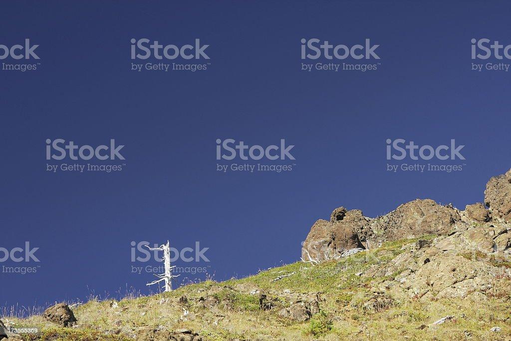 Mountain Peak Dead Tree Extreme Terrain royalty-free stock photo