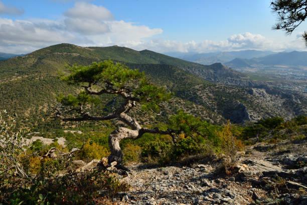 Cтоковое фото Mountain range and coniferous tree.
